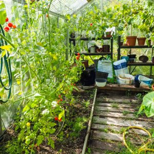 Why everyone should start to greenhouse