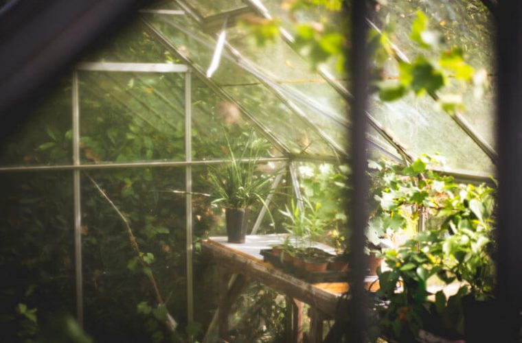 prepare greenhouse for winter and growing plants