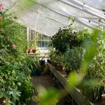greenhouse winter insolation with bubble wrap