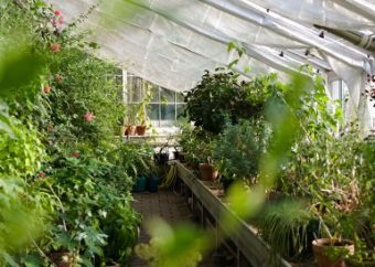 Why everyone should start a greenhouse
